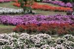 花の都公園3