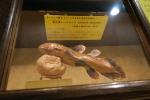 奇石博物館15