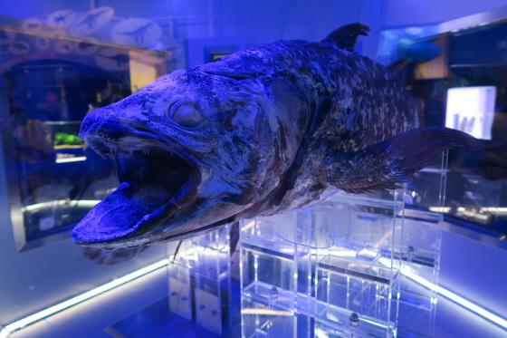 深海水族館7