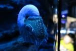 深海水族館3