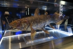 深海水族館6