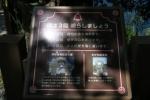 恋人岬15