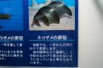 下田水族館3
