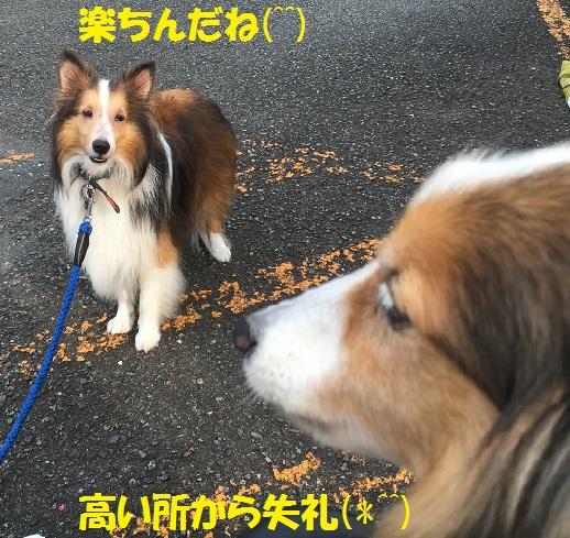 鎌倉2コタロー