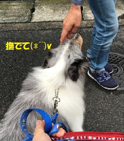 ミミちゃん3