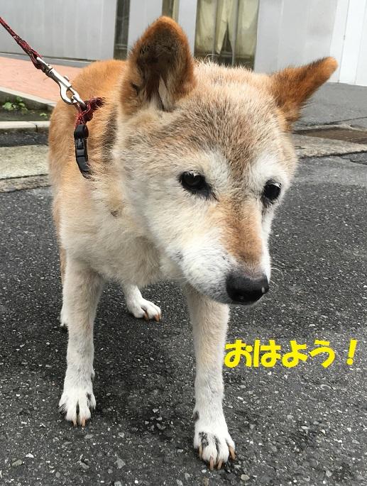 ミミちゃん1