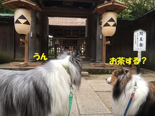 円覚寺99