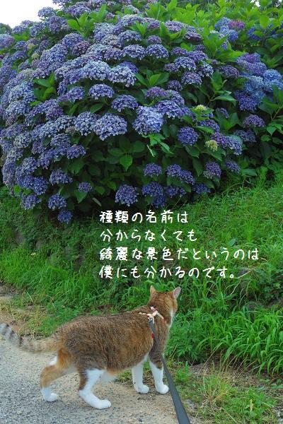 小野谷11