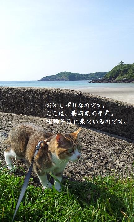 根獅子浜1