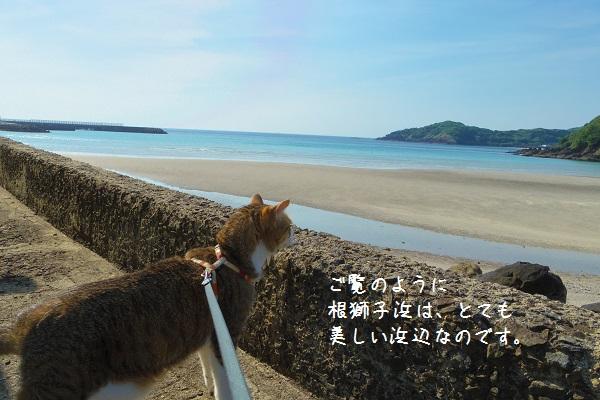 根獅子浜2