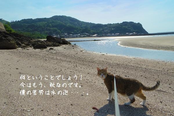 根獅子浜4