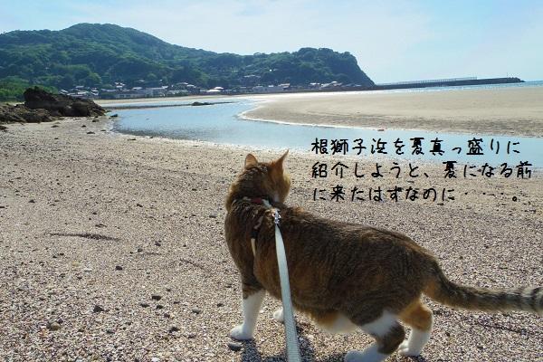 根獅子浜3