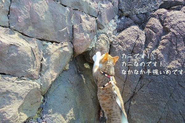 根獅子浜7