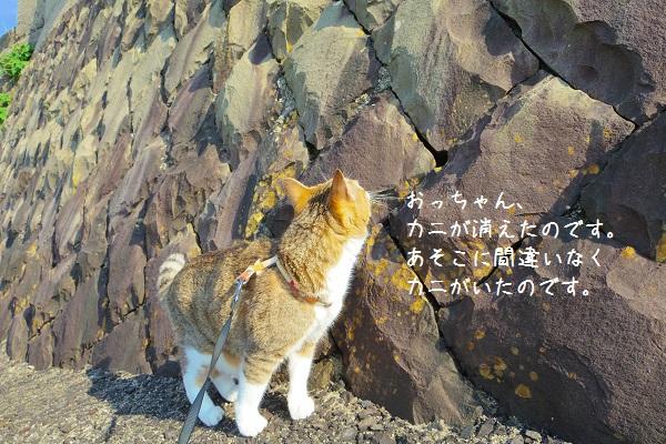 根獅子浜8