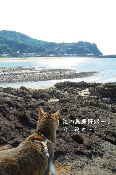 根獅子浜10
