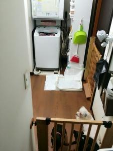犬保護部屋3