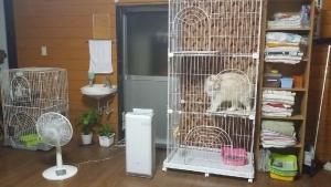 猫保護部屋1