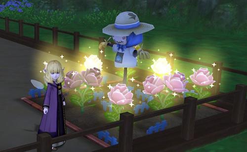 畑にバラが咲きました