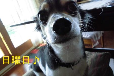 CIMG2001sd.jpg