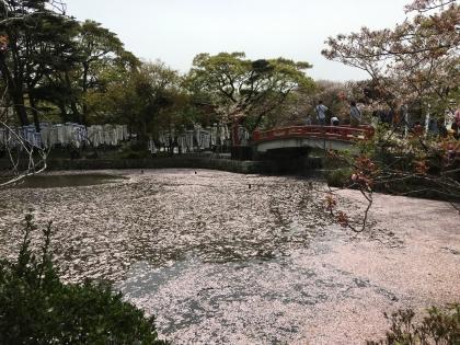 鎌倉祭11
