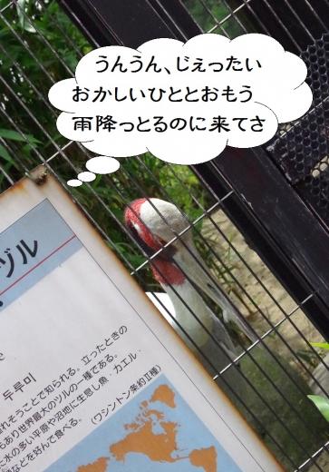福岡市動物園のツル