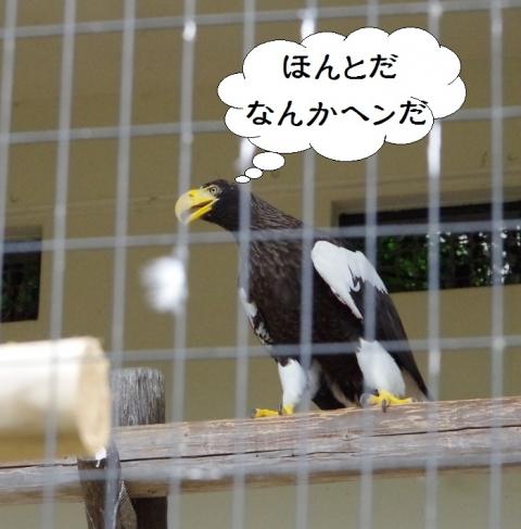 福岡市動物園で撮影