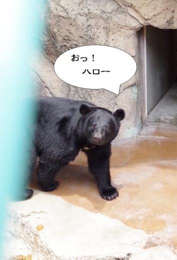 福岡市動物園の熊さん