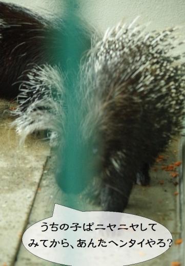 アフリカタテガミヤマアラシ African Porcupine / 齧歯目 ヤマアラシ科