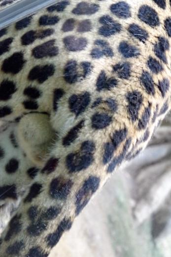 福岡市動物園 ふくおかのデッカイ猫 鈴カステラ