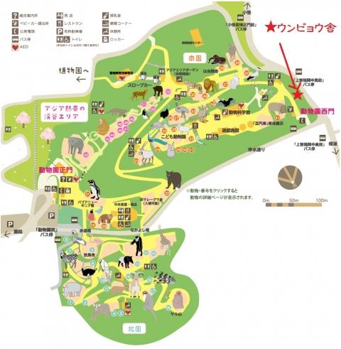 福岡市動物園マップ ウンピョウの獣舎の場所