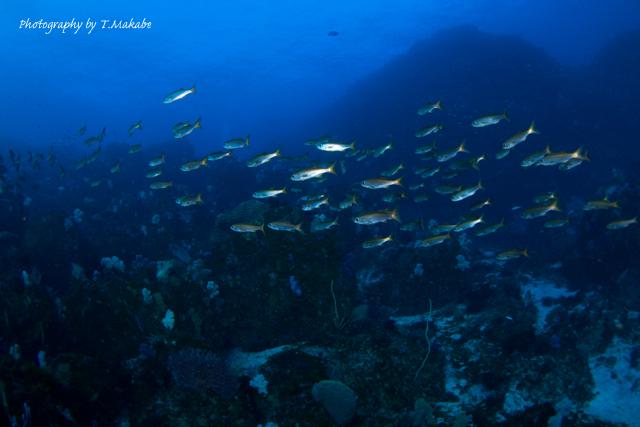 伊豆海洋公園のムツ
