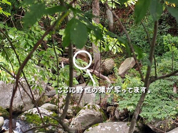 adumino-20161010-15s.jpg
