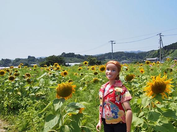 himawari-20160718-04s.jpg