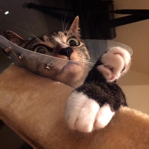 cat adoption northern va