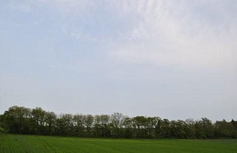 160405 空と木立