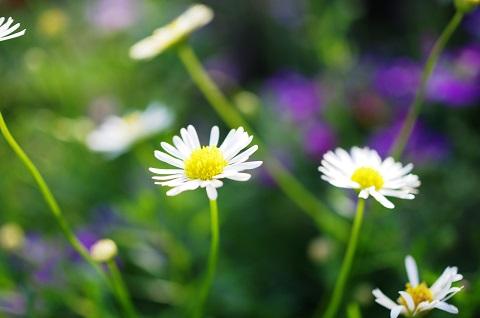 160725 白い花
