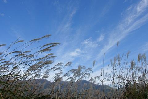 160915 ススキと青空