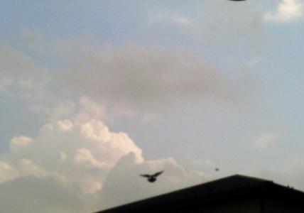 20160714入道雲と鳩