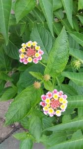 20160915花