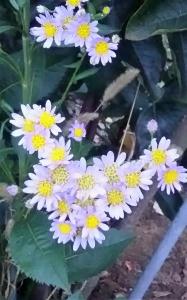 20161004花