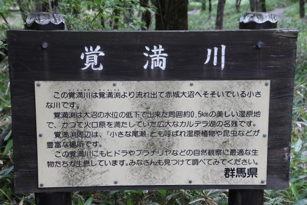 16満州餃子21