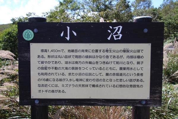 16満州餃子28