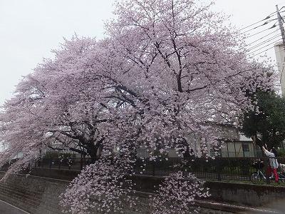saginomiya-street55.jpg