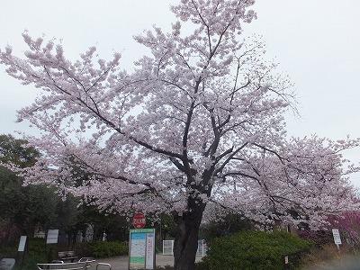 saginomiya-street56.jpg