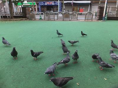 shibuya-street139.jpg
