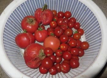2016_07 28_夏の収穫・3