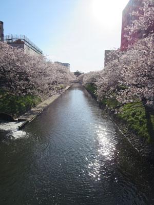 matukawa2016-4sakura.jpg