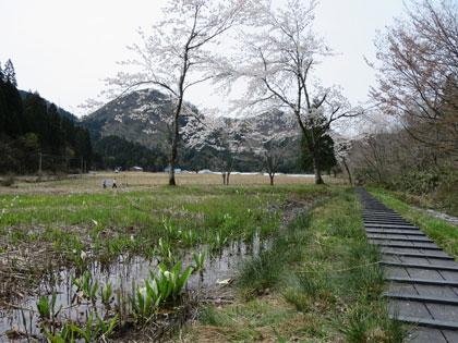 mizubasyou2016-4.jpg
