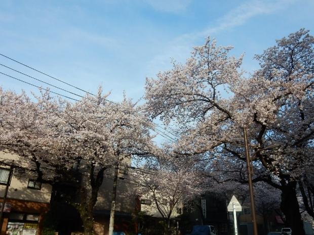 桜2016-4-6 (41)