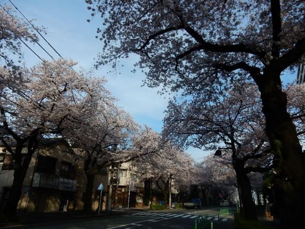 桜2016-4-6 (46)
